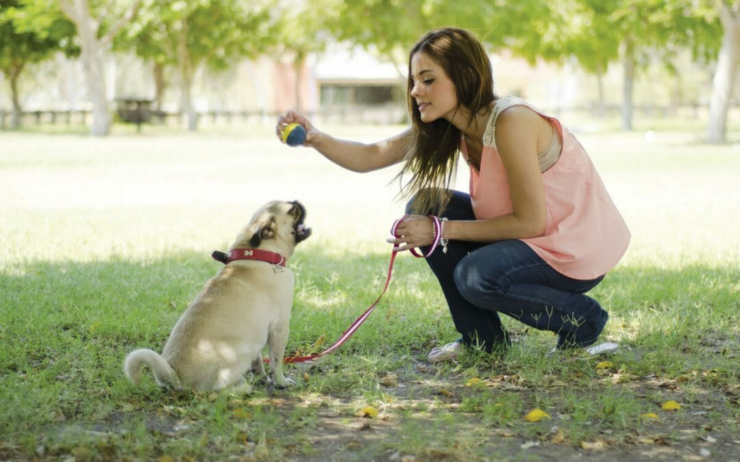 Welcome a 4-Legged Family Member with Care Tips for a successful, lifelong pet adoption